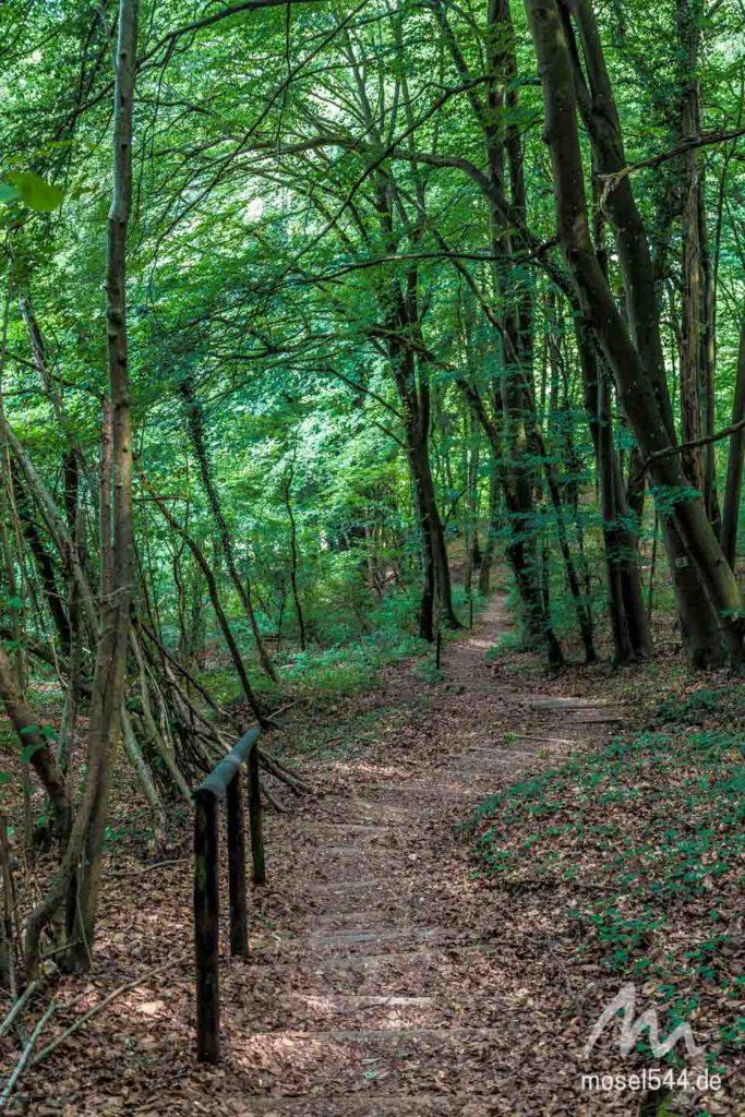 Etappe 2 Waldweg