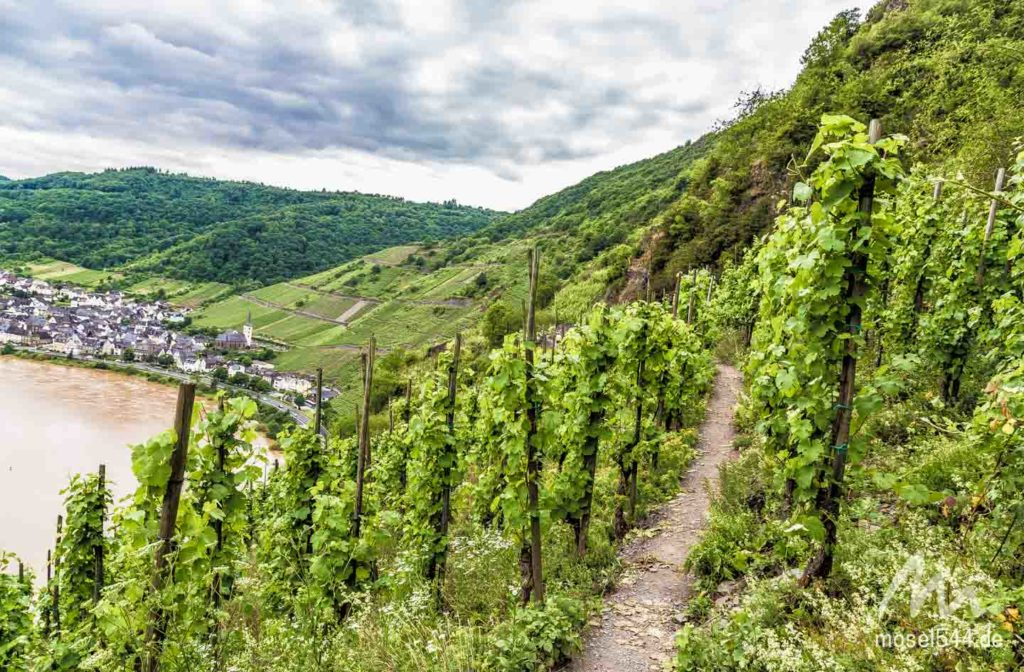 Weinberge Calmont