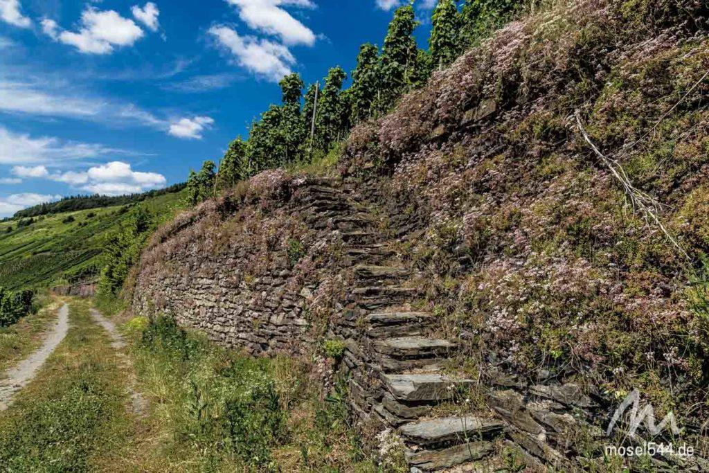 Weinberge mit Treppe