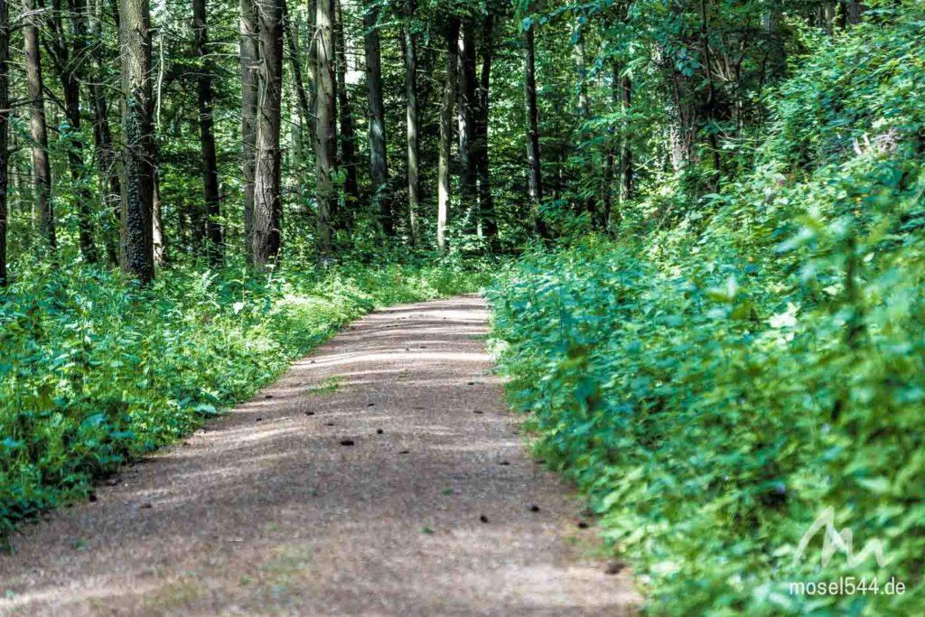 Waldweg Moselsteig-Etappe 4