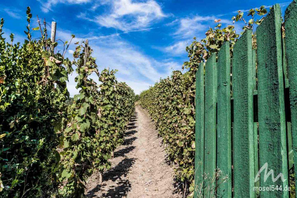 Tor zu den Weinlagen