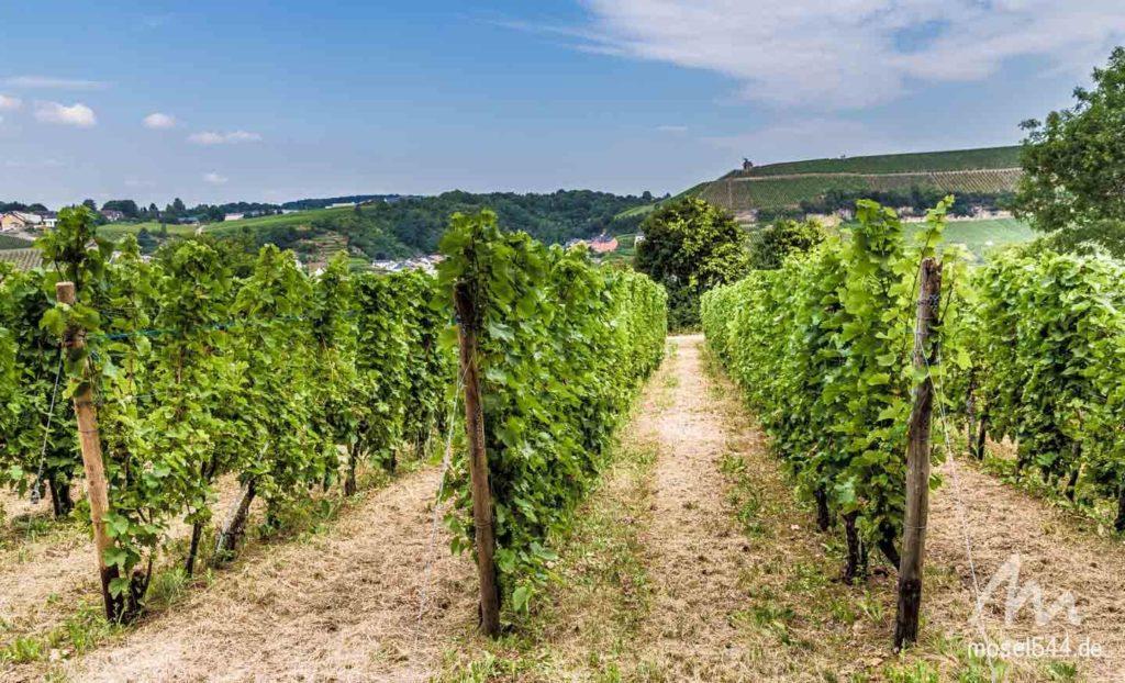 In diesen Weinlagen wächst auch der Elbling.